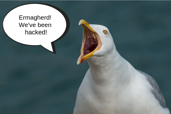 Seagull yelling we've been hacked