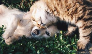 cat and dog cuddling in grass
