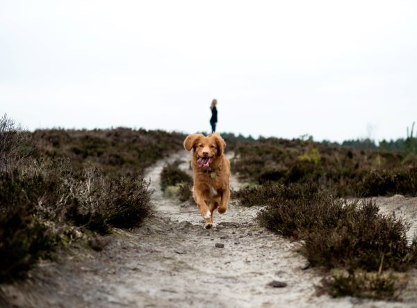 Happy dog running at the beach