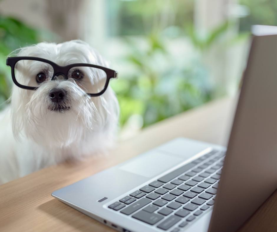 puppy with glasses using a laptop